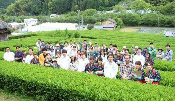 新茶摘み体験の写真