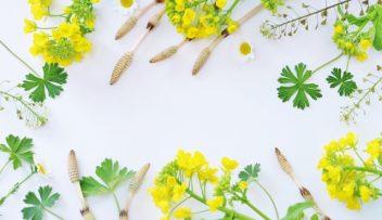 春の陽気と心トラブル養生法の画像