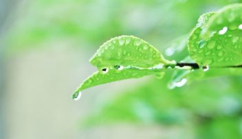 穀雨~こくう~の写真